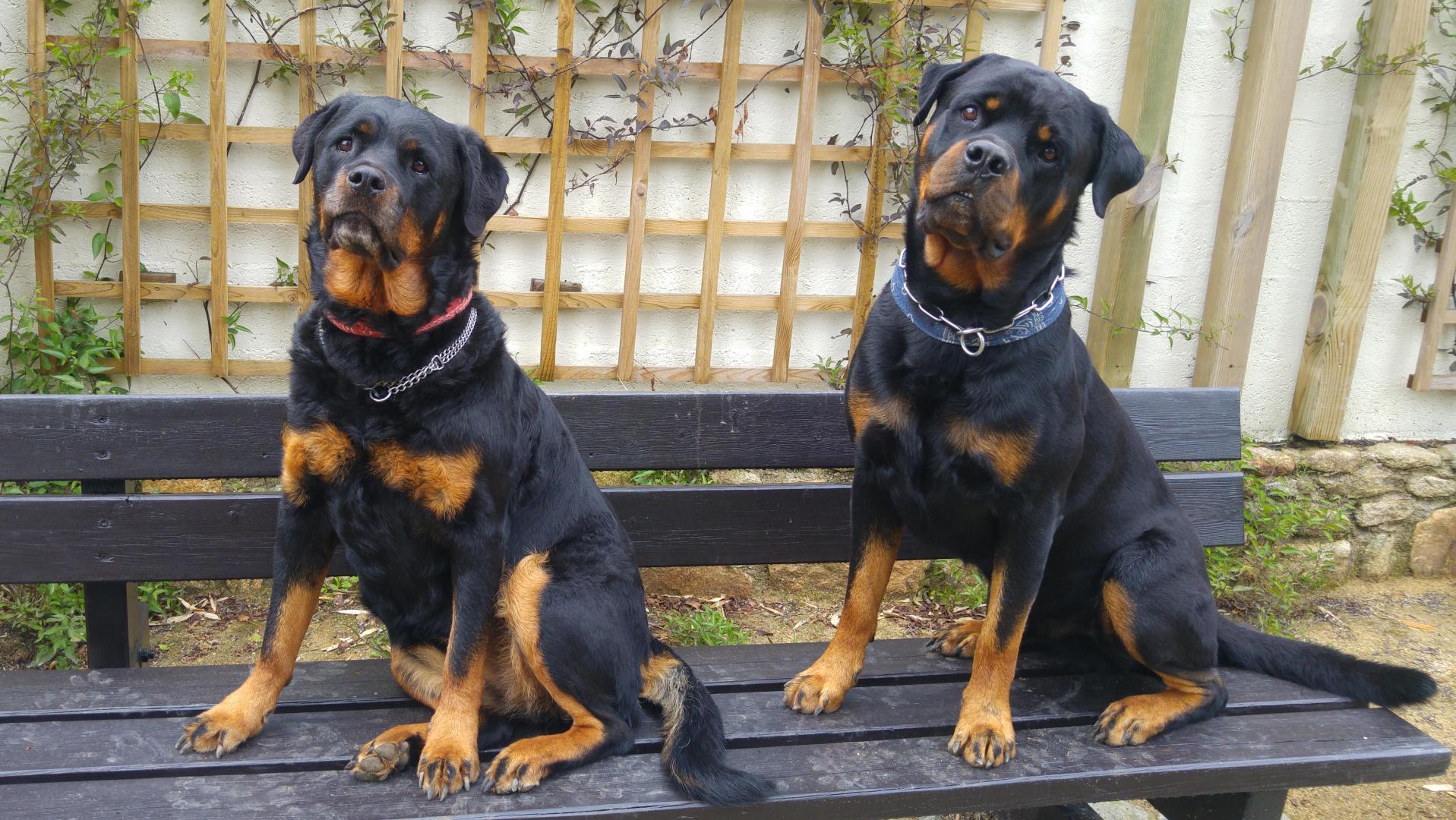 croquettes chien sans c r ales agneau 13 5kg 100 grain free. Black Bedroom Furniture Sets. Home Design Ideas